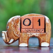 'Single Elephant